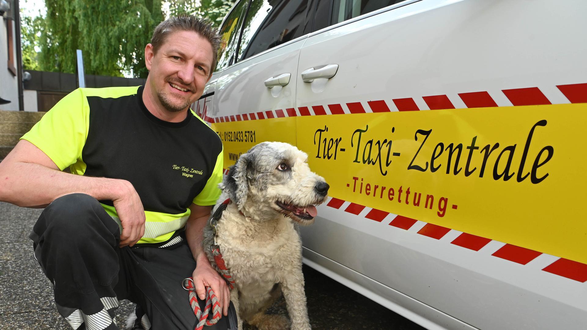 Markus Wagner von der Tier-Taxi-Zentrale, aufgenommen an seinem Fahrzeug mit der vier Jahre alten Bobtail Hündin Paula, die er regelmässig mit seinem Taxi fährt.