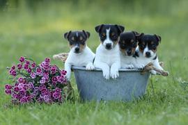 Vierfachen Grund zu feiern hat die Facebook-Nutzerin Uschi Fesenbeck aus Waghäusel am Welthundetag.