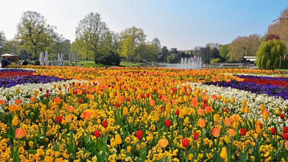 Blumen im Stadtgarten