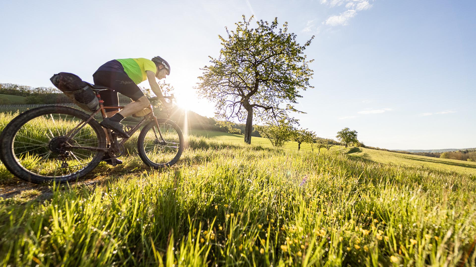 Radfahrer zwischen Getreidefelder