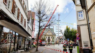 Der Zunftbaum auf dem Brettener Marktplatz wird mithilfe eines Krans gesichert.