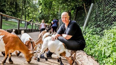 Faru umringt von Ziegen