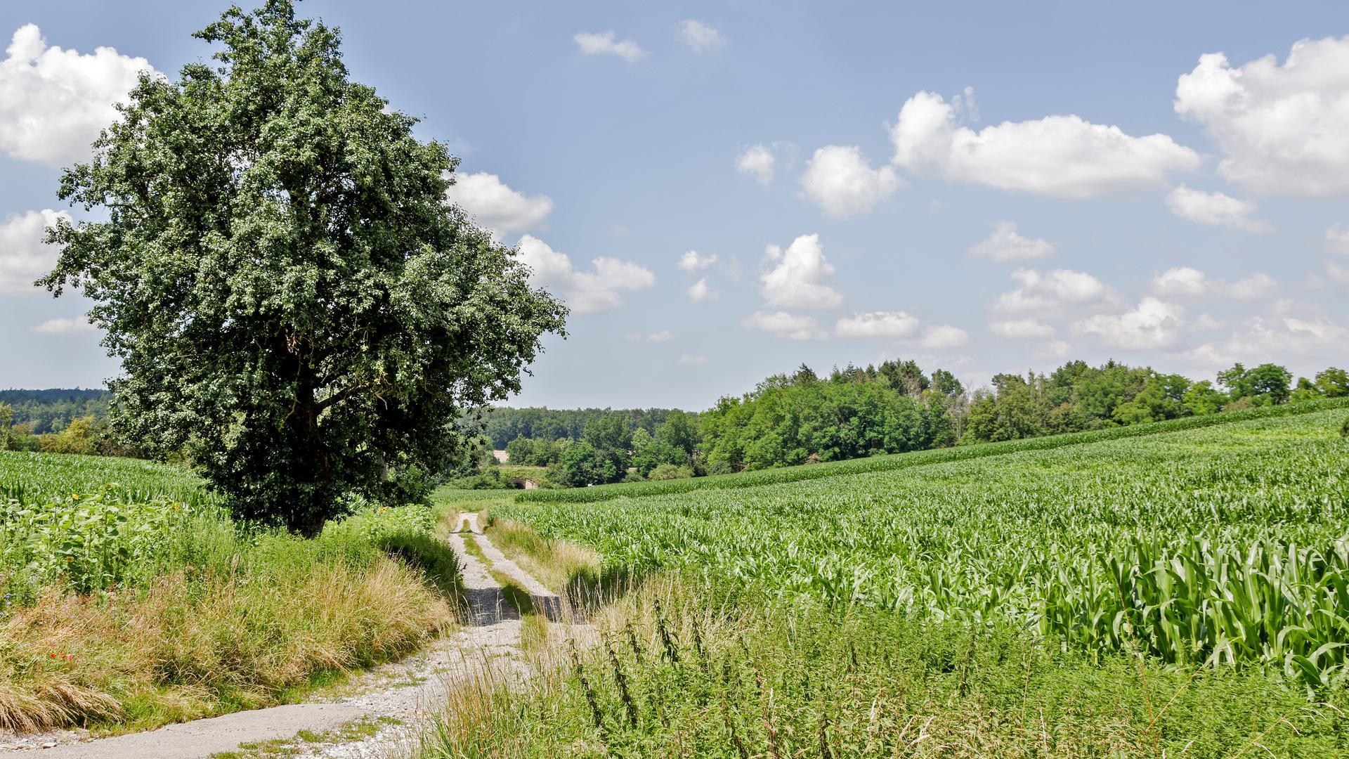 Feldweg und Feldflur im Riklinger Tal