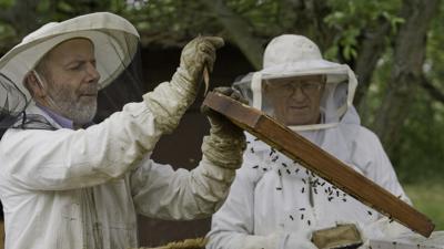 Befürchtet dramatische Veränderungen: Sieghard Blanc (links), Vorsitzender des Brettener Imkervereins, spricht zwar von einem guten Bienenjahr 2020, doch die stetige Trockenheit bereitet ihm immer mehr Sorgen.