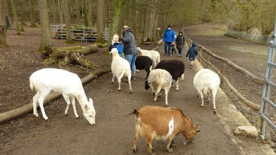 Ziegen und Schafe stehen auf einem Weg mit Kindern