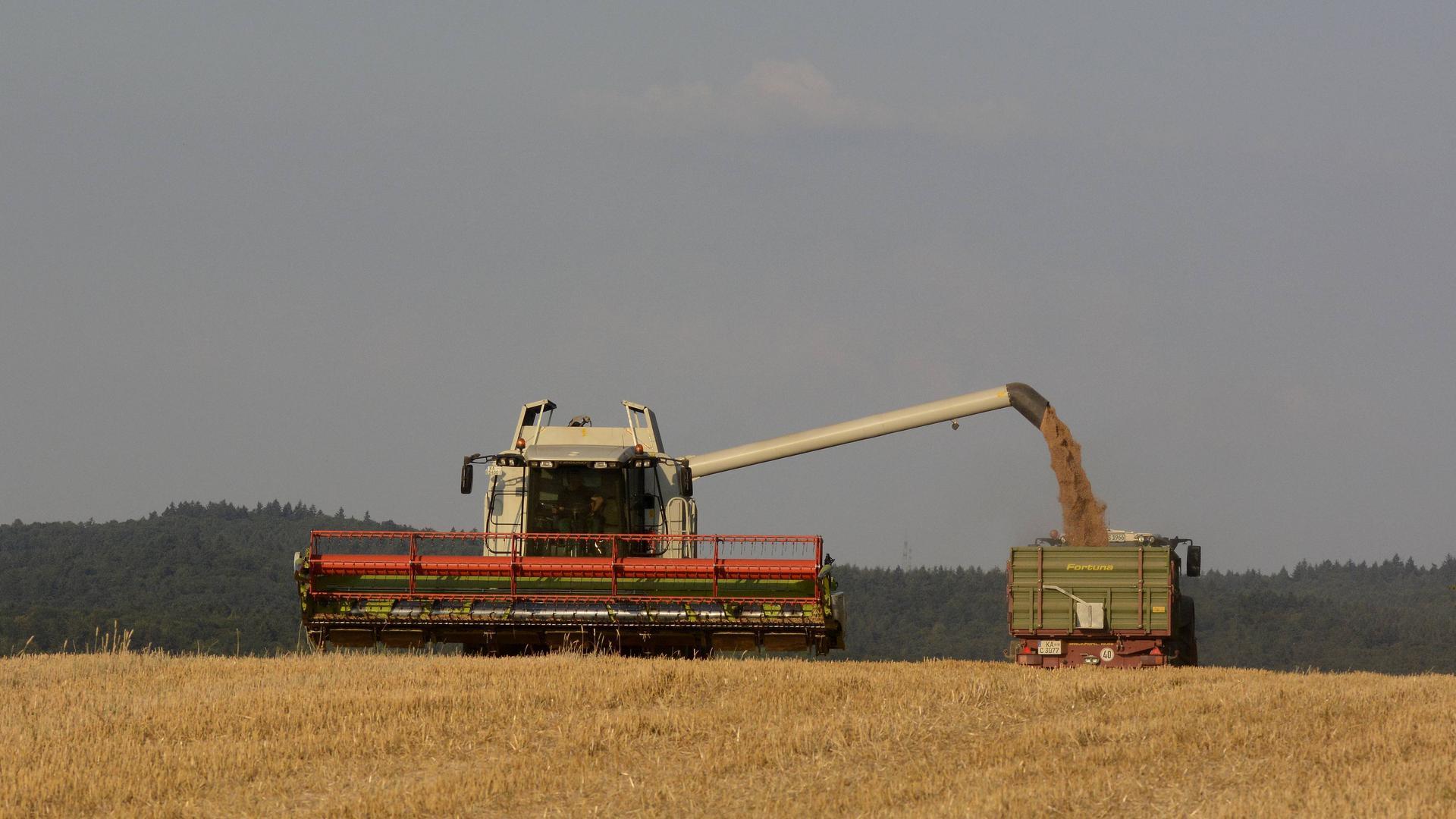 Erntejahr 2021: Getreideernte zwischen Obergrombach und Gondelsheim.