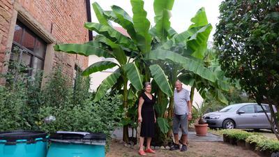 Eine Frau und ein Mann stehen nebeneinander vor einer Bananenstaude.
