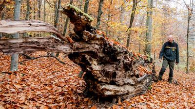 Mann bei abgestorbenem Baum