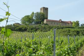Bewegte Geschichte: Es ist eines der altehrwürdigsten Weingüter in der Region. Jetzt feiert die Burg Ravensburg in Sulzfeld einen ganz besonderen Geburtstag.