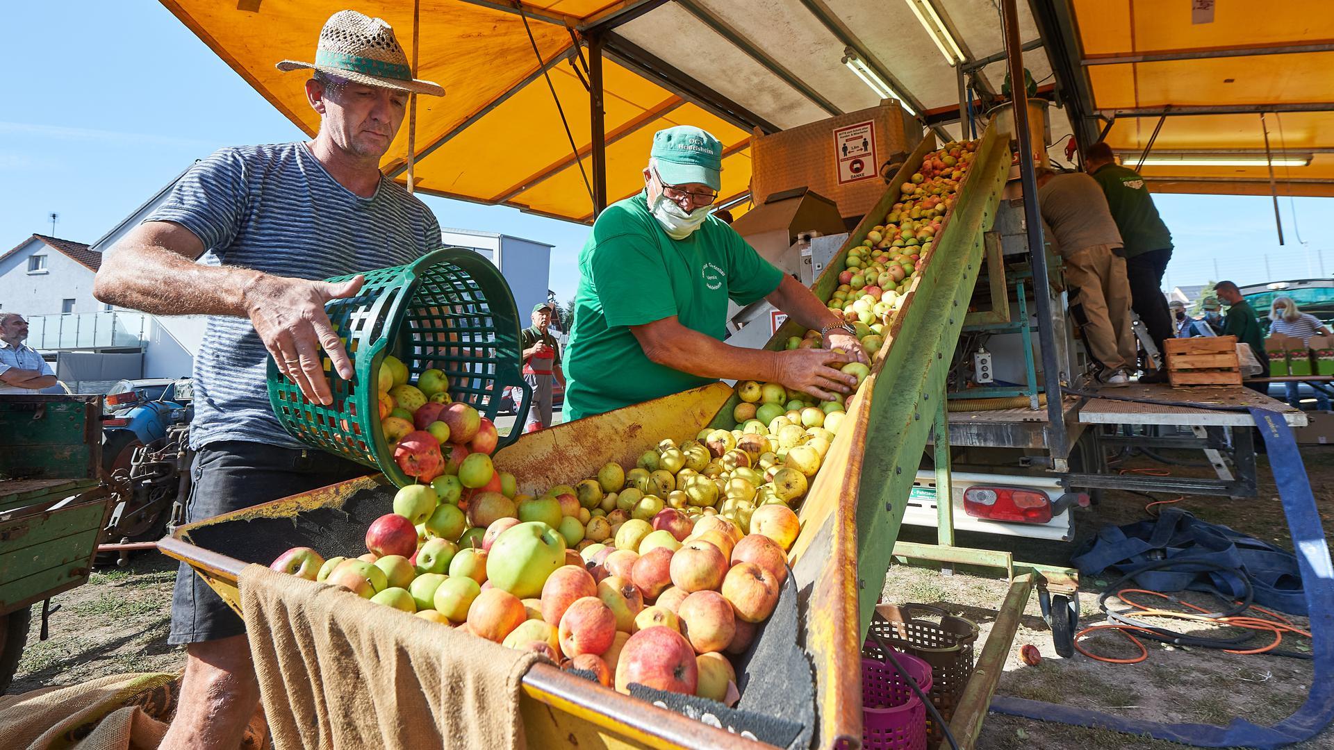 Apfelsaftpresse OGV Heidelsheim