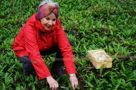 Ältere Dame mit roter Jacke und Stirnband sammelt Bärlauch
