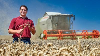 Mann steht im Getreidefeld, Mähdrescher im Hintergrund