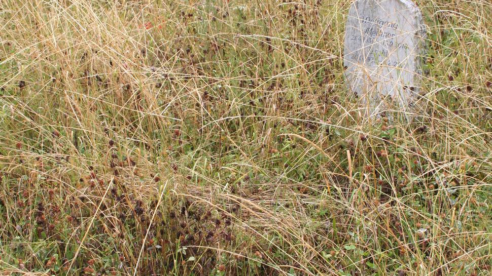 Grabsteine hinter hohem Gras