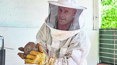 Kennt sich mit Wespen und Hornissen aus: Der Fachberater des Landkreises Harald Wiedemann, hier bei der Entfernung eines Hornissen-Nestes.