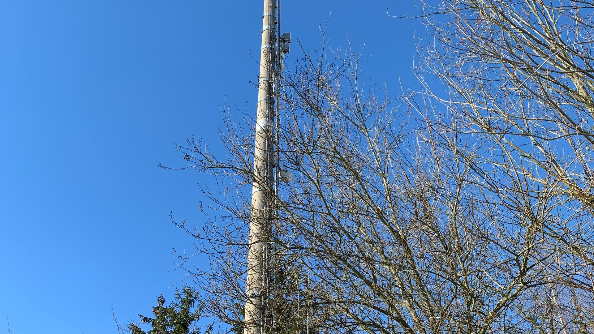 Funkmast hinter Bäumen