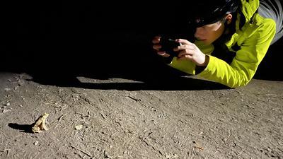 Junge fotografiert eine Kröte