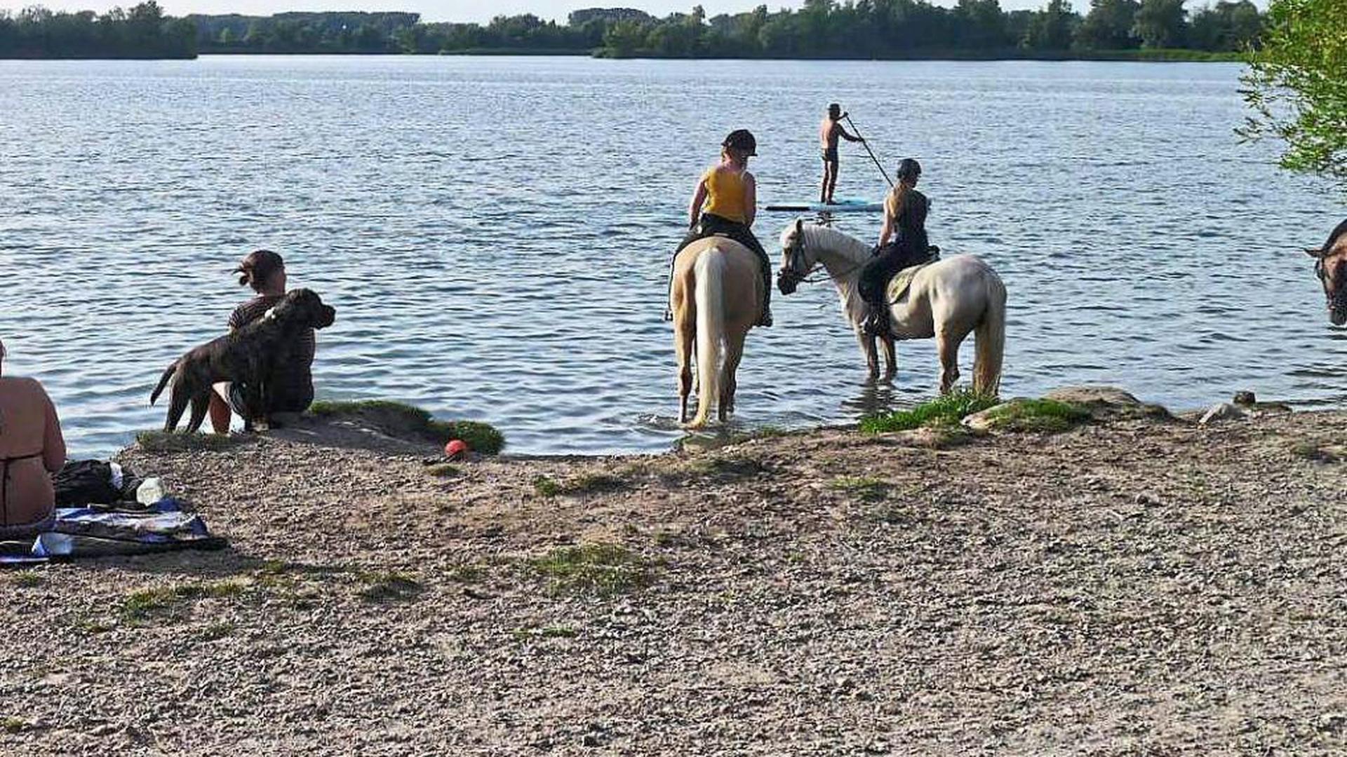 TIERISCHER BADESPASS: Hunde und Pferde genießen den Aufenthalt am Erlichsee in Oberhausen-Rheinhausen – zum Ärger von Anwohnern.