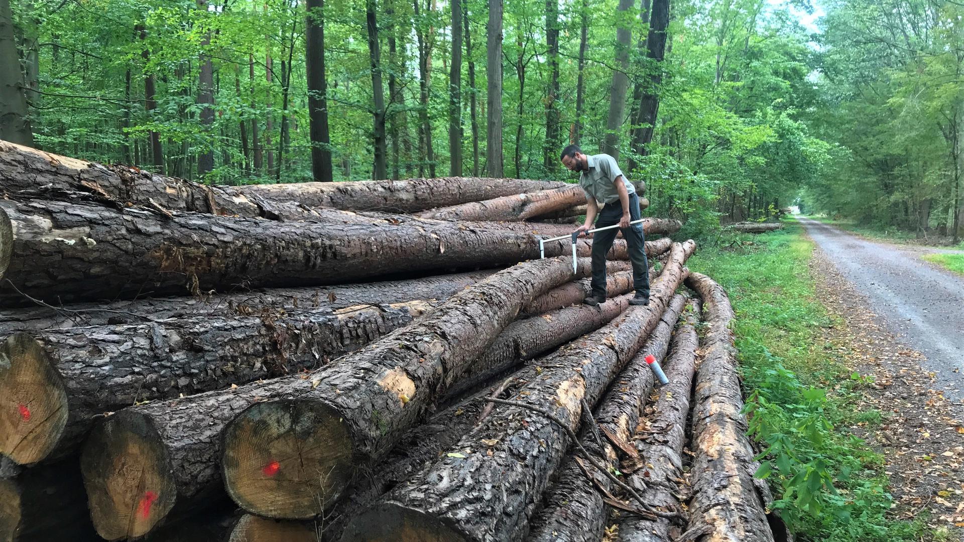 Mann vermisst Holzstämme im Wald