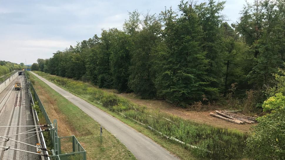 Holzlagerplatz an der Bahnstrecke zwischen Forst und Hambrücken