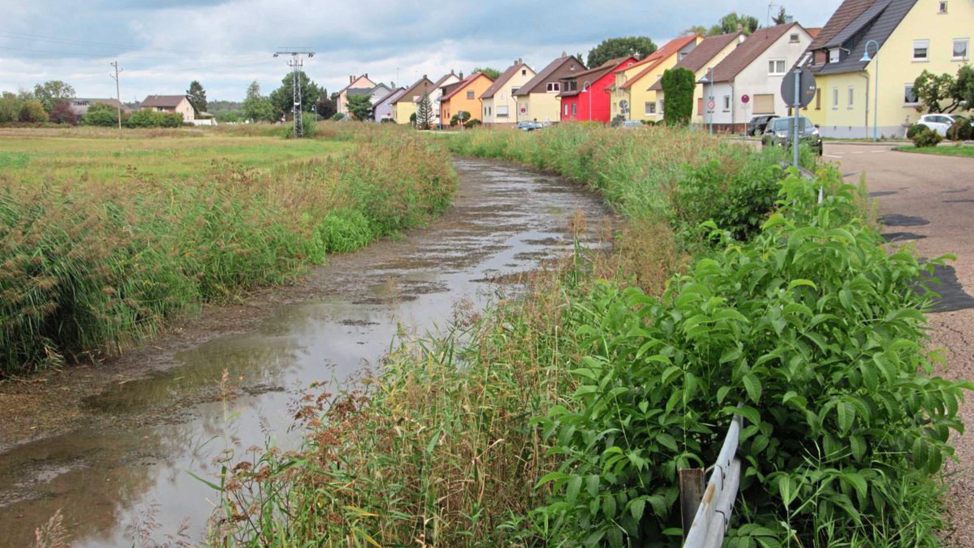 Der Pfinzkanal bietet derzeit ein recht trauriges Bild. Der niedrige Wasserstand wird langsam aber sicher zum Problem.