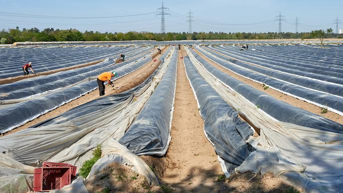 Große Anbaufläche: Jörg Schreiber besitzt insgesamt 42 Hektar Anbaufläche