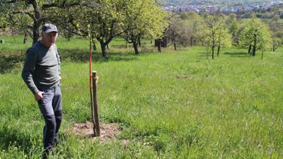 Gebhard Reiser mit dem verbliebenen Zwetschgenbaum