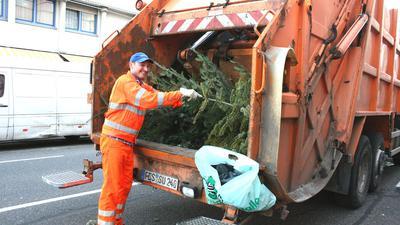 Andreas Schulz sammelt Christbäume für die Sulo Südwest