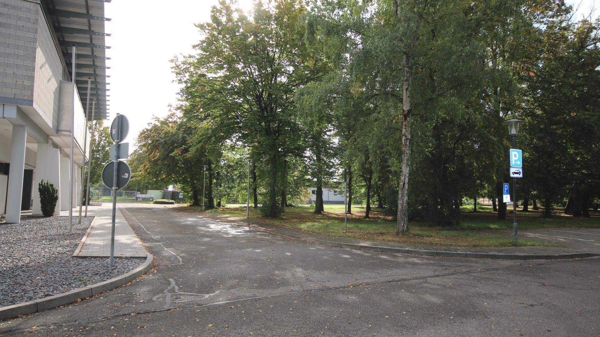 In dem Waldstück gegenüber der Wiesentaler Wagbachhalle ist der Bau eines Mehrgenerationen-Sportparks geplant.