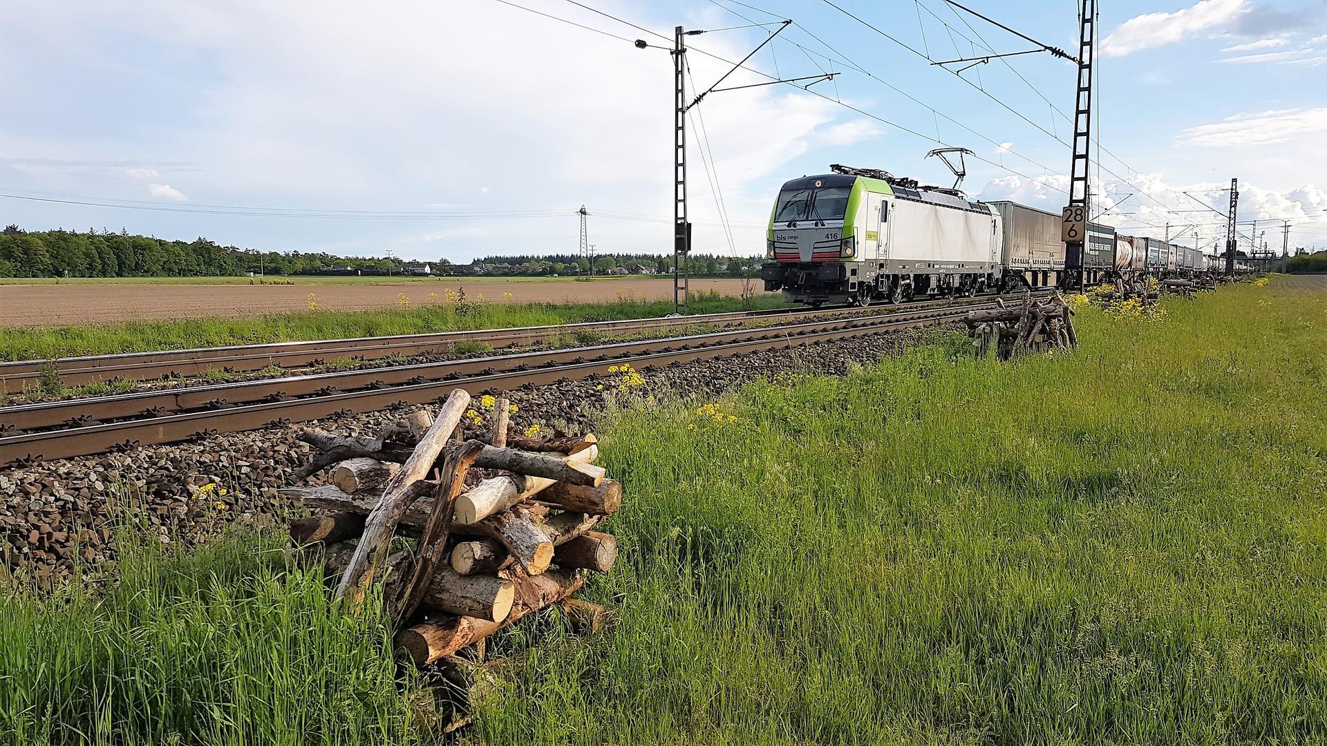 Reptilien sollen in dem aufgeschichteten Holz entlang der Gleise zwischen Waghäusel und Neulußheim wohnen.