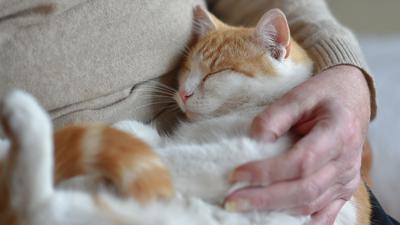 Katzen entwickeln eine ganz ähnliche Bindung an ihre Bezugsperson wie Kleinkinder.  Haustiere schenken Wärme und - wenn man sie gut behandelt – bedingungslose Liebe.