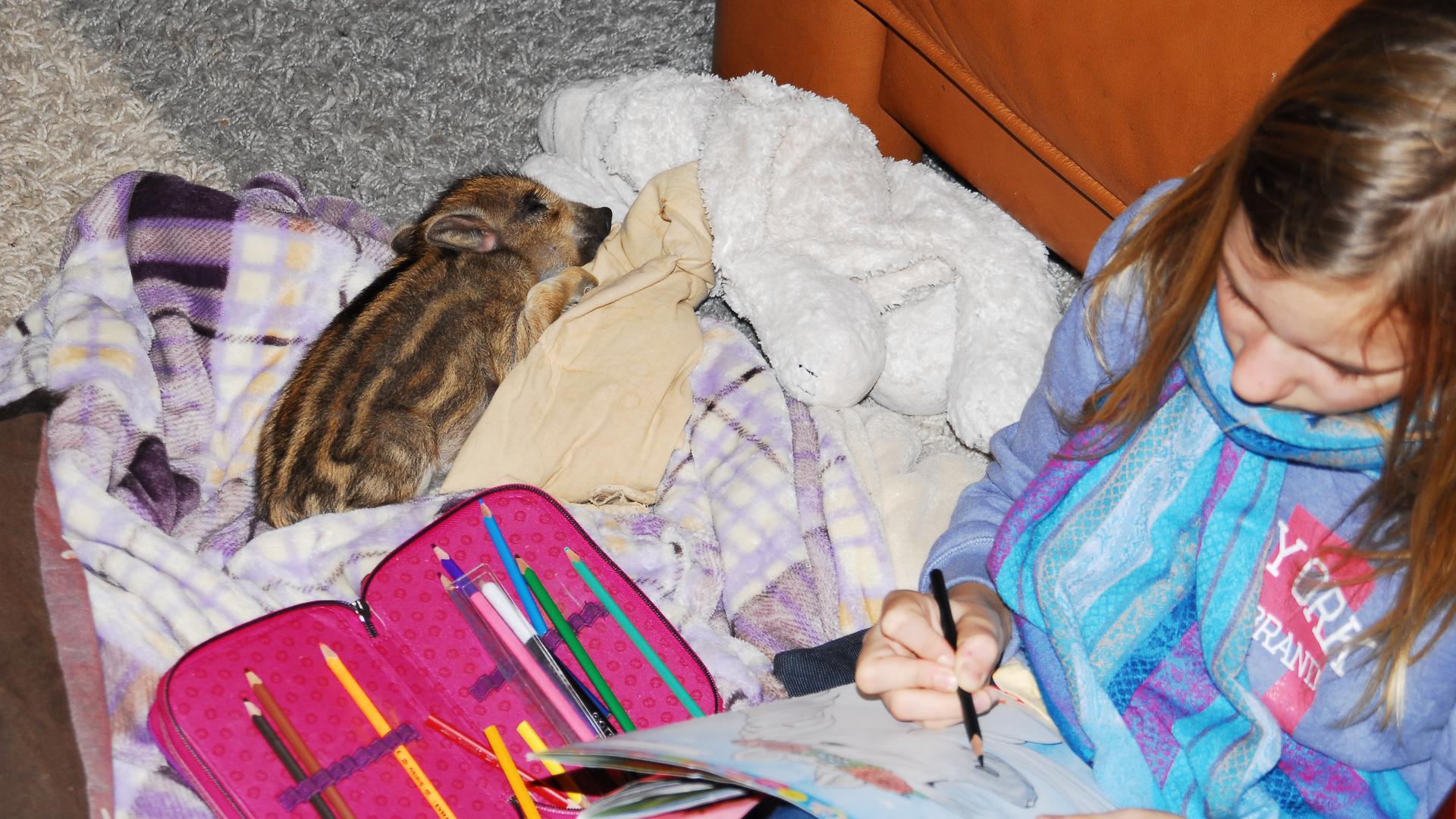Ein kleines Wildschwein liegt neben einem Mädchen