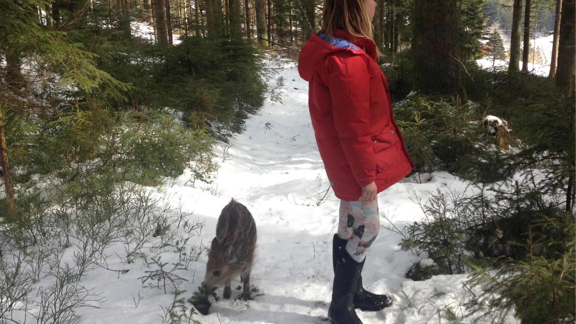 Ein Wildschwein und ein Mädchen stehen im Wald.
