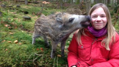 Ein Wildschwein berührt mit der Schnauze das Gesicht eines Mädchens.