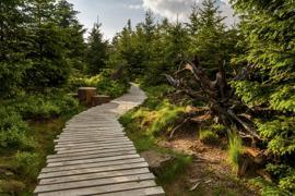 Lotharpfad im Nationalpark Schwarzwald