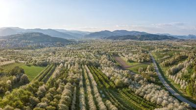Blick über die Ortenau, grüne, blühende Landschaft und blauer Himmel. Im Hintergrund Berge.