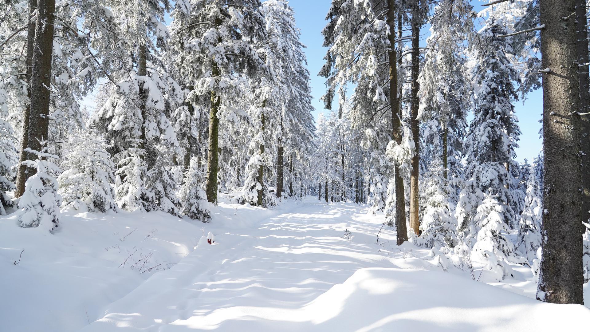 Winterlandschaft entlang der Schwarzwaldhochstrasse zwischen Mummelsee und Unterstmatt.