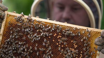 Ein hält eine Bienenwabe in den Händen auf dem Balkon seiner Stadtwohnung.