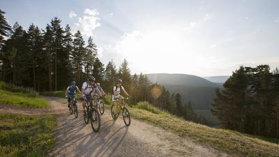 Eine Gruppe von Radlern fährt durch den Schwarzwald