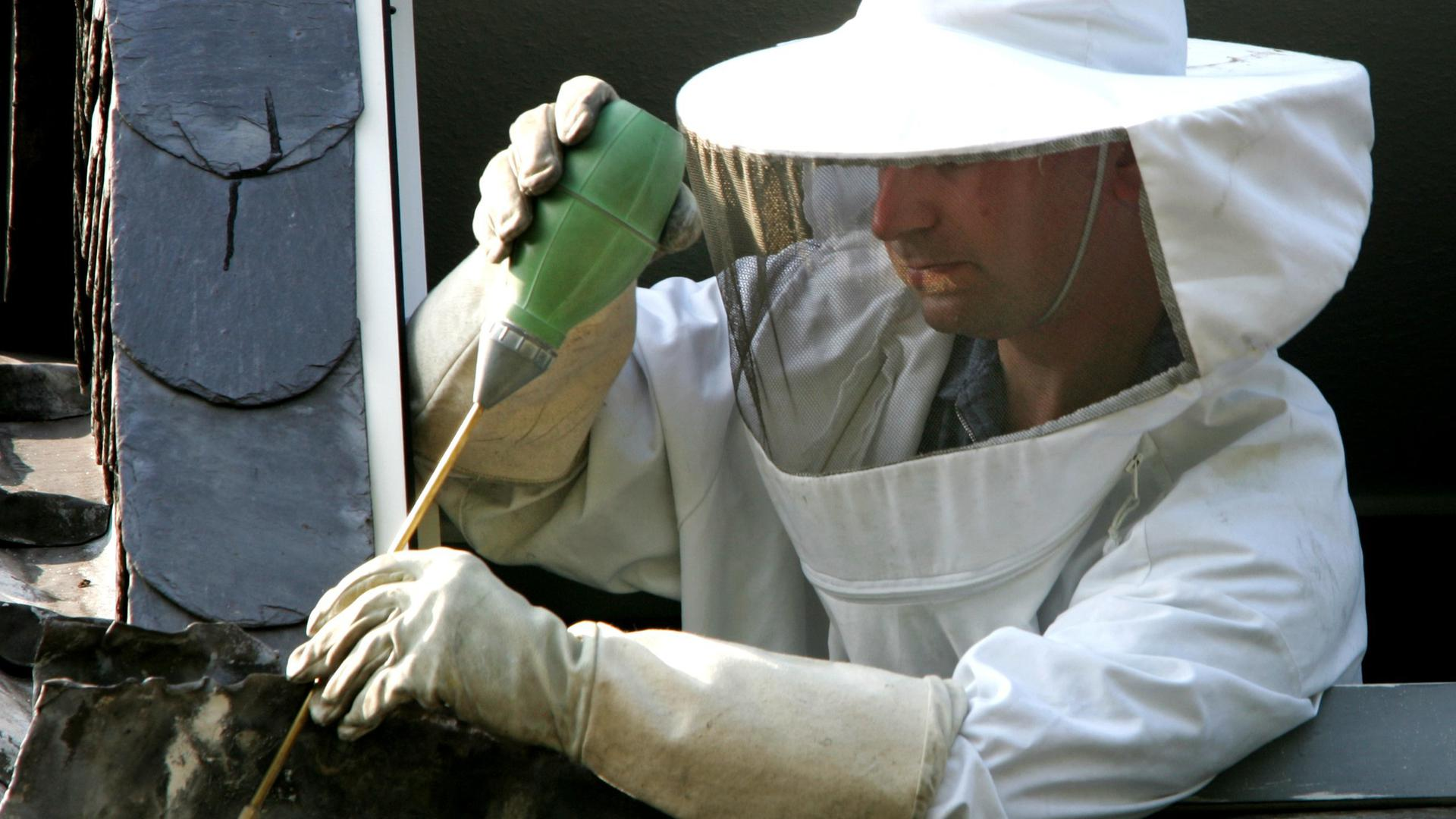 Gefragte Fachkraft: Schädlingsbekämpfer sind im Moment nahezu im Dauereinsatz.