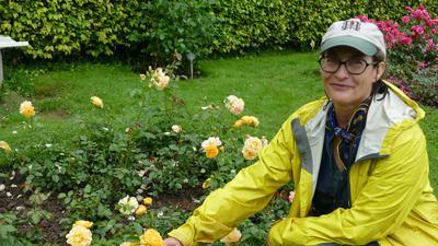 """Die gelbe Rose """"Absolutely Fabulous"""" kennt Rosenpflegerin Alisa Smith aus den USA unter dem Namen """"Julia Child"""". Sie wurde nach einer US-Fernsehköchin benannt, die eine Freundin ihrer Mutter war."""