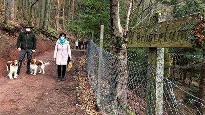Ein Mann mit Hunden und eine Frau spazieren auf einem Waldweg.