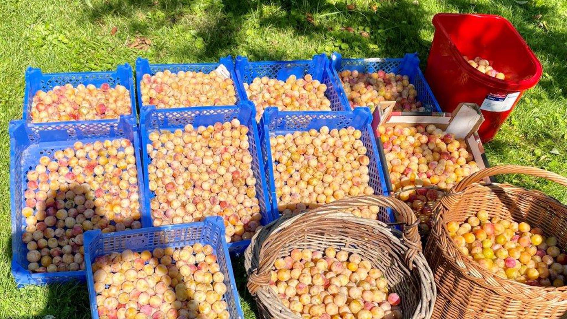 Wer sein Obst nicht selbst verwenden möchte oder ernten kann, der kann sich bei den Foodsavern melden. Sie helfen gerne.