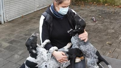 Wild und verspielt: Die Welpen aus dem Jagdhund-Wurf begrüßten jeden Besucher im Tierheim mit Begeisterung.