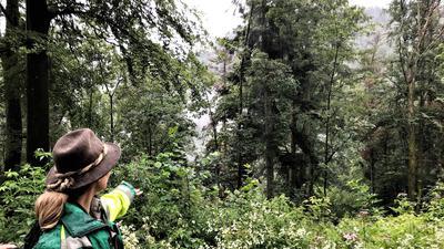 Eine Försterin zeigt auf tote Bäume im Wald.