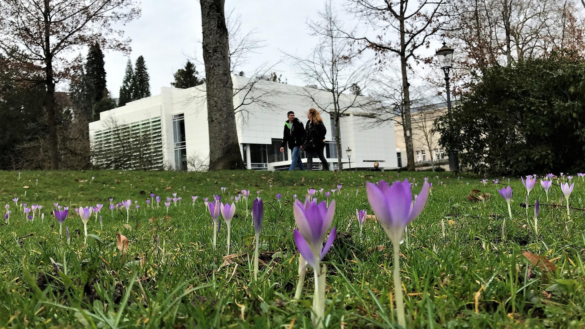 Menschen spazieren durch die Lichtentaler Allee in Baden-Baden, wo die ersten Krokusse blühen.