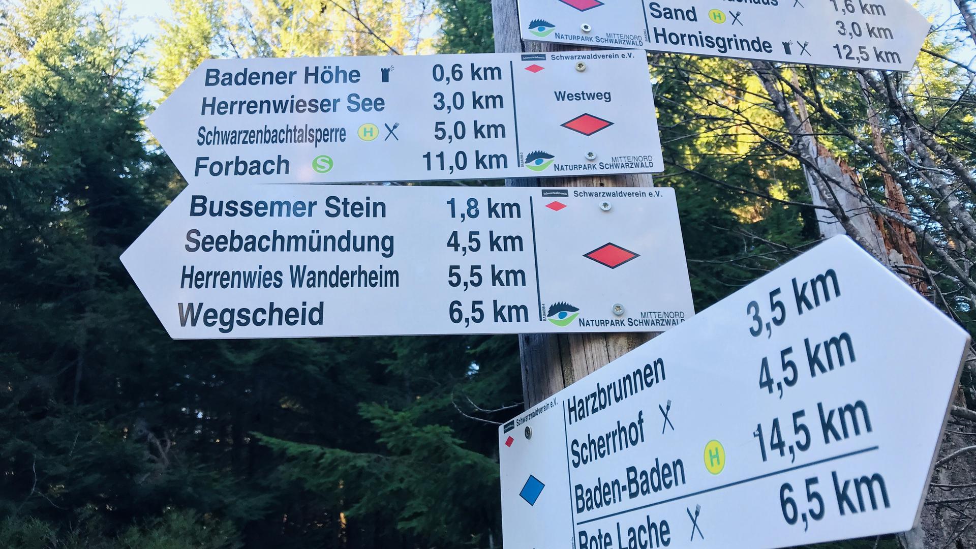 Wo soll es hingehen? Das Netz an Wanderwegen ist auch im nördlichen Teil des Nationalpark Schwarzwald groß. Höchster Punkt Baden-Badens ist mit 1.002,5 Meter Höhe die Badener Höhe.