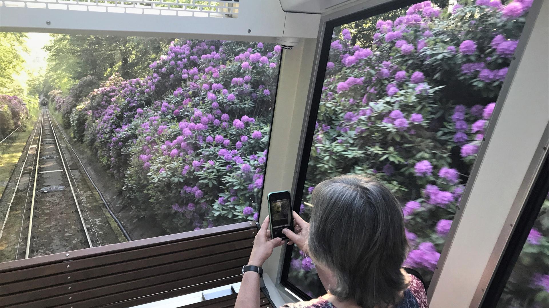 Die Merkur-Bergbahn fährt auf ihrer rund 1,2 Kilometer langen Strecke auch an üppig blühenden Rhododendron-Sträuchern vorbei.