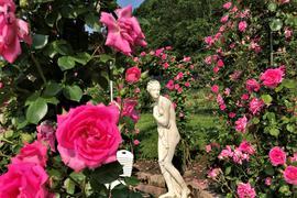 Im Rosenneuheiten-Garten Baden-Baden steht eine Statue zwischen blühenden Rosen.