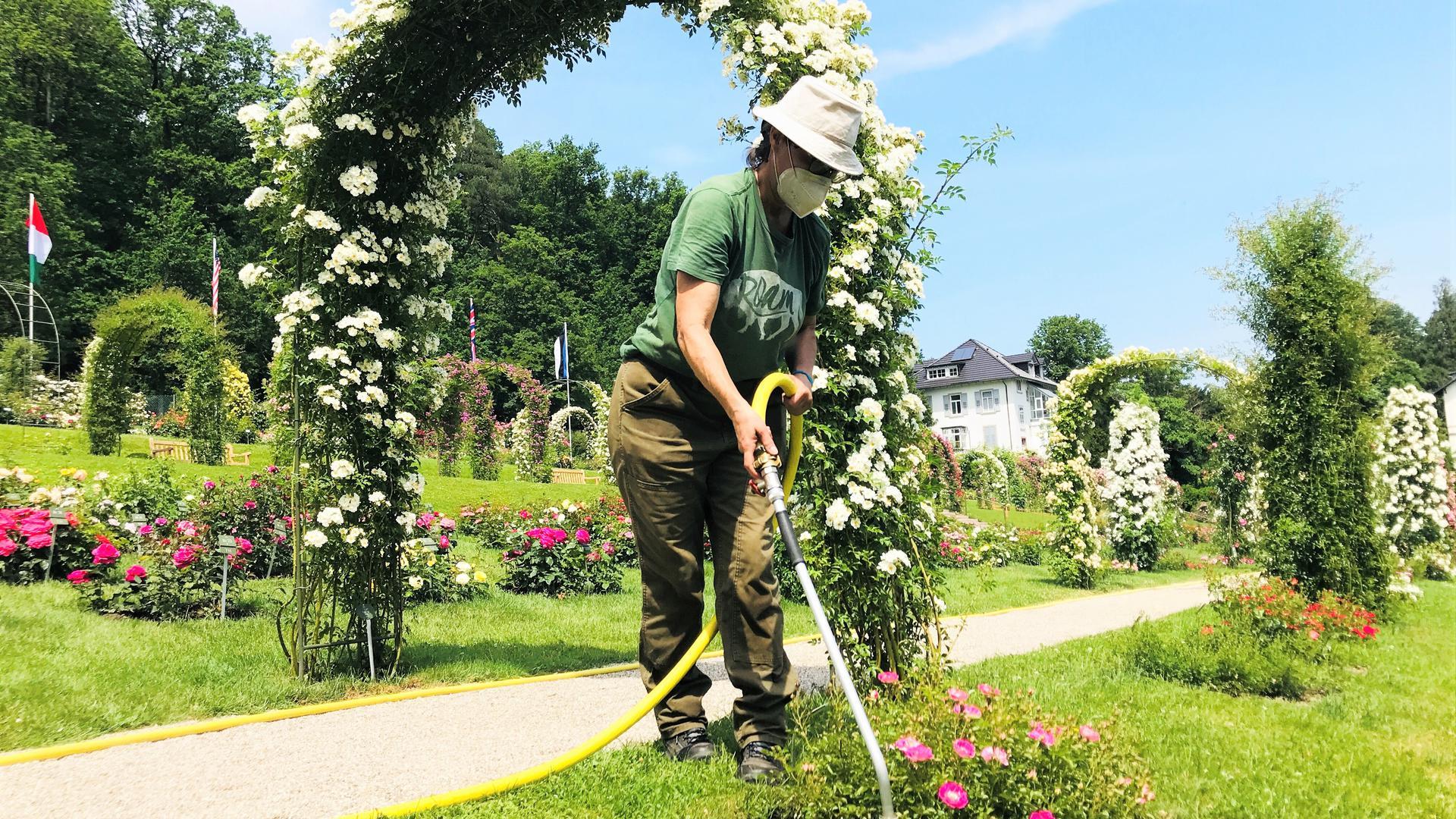 Eine Mitarbeiterin der Stadtgärtnerei bewässert Pflanzen im Rosenneuheitengarten auf dem Beutig in Baden-Baden.