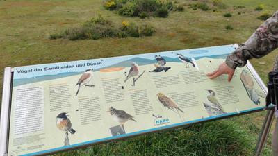 Eine Frau zeigt auf eine Tafel mit seltenen Vogelarten im Naturschutzgebiet.